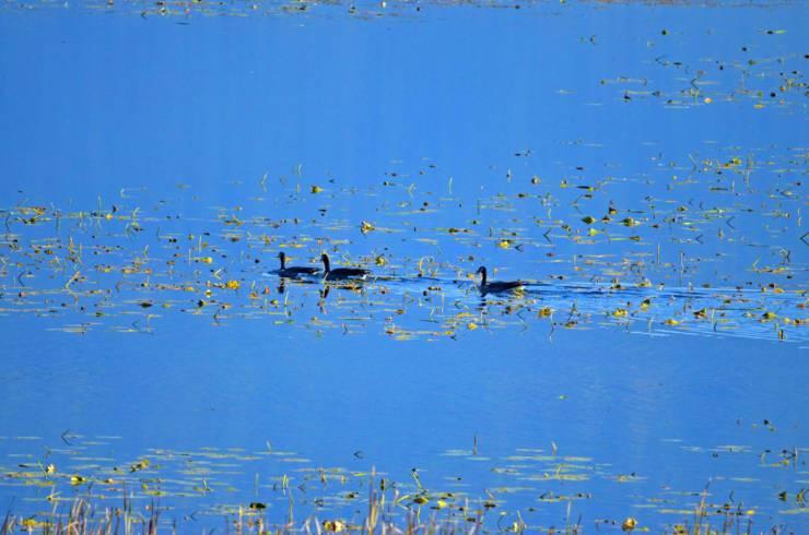 Columbia Wetlands Waterbird Survey