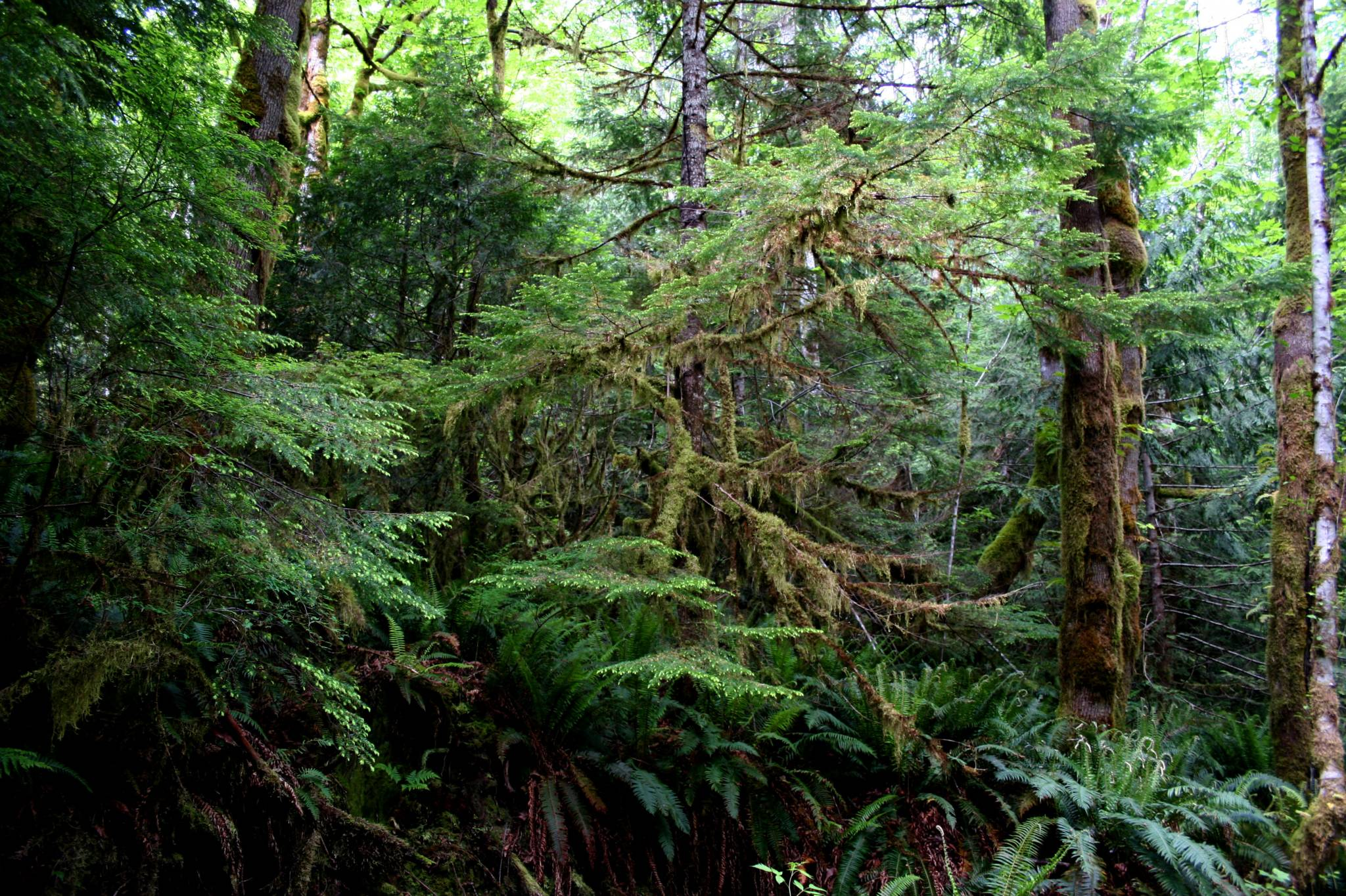 Inland Temperate Rainforest Wildsight