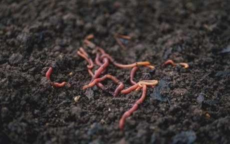 worms_1462213c