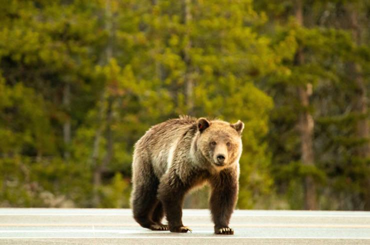 Credit US National Park Service